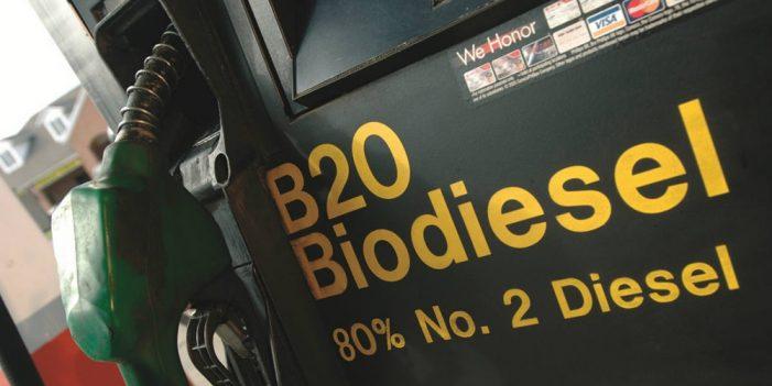 Estudiante experimenta con plantas para generar biodiésel